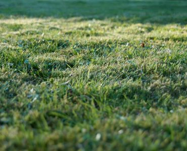 How to collect grass clippings after mowing image
