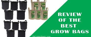 Best Grow Bags for tomatoes review image