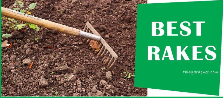 Best Rake For grass image reviews image