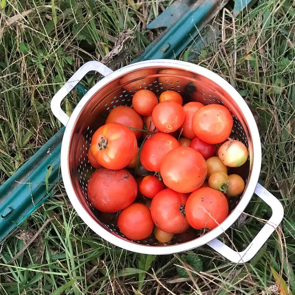 How To Grow Tomatoes In Pots From Seeds image