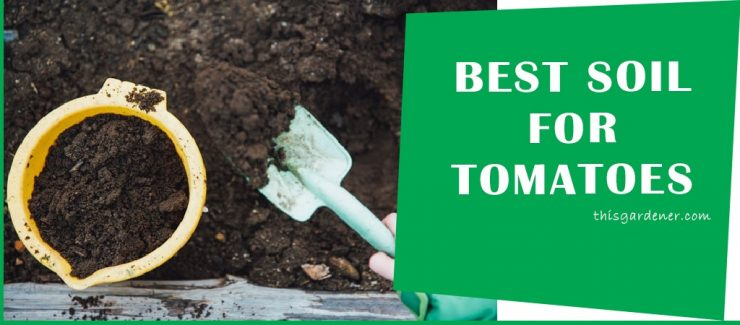 Best Soil For Tomatoes In Raised Beds main image 1