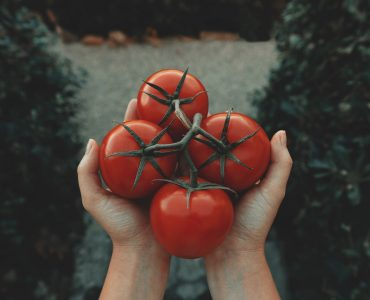 how to tell determinate from indeterminate tomatoes 1