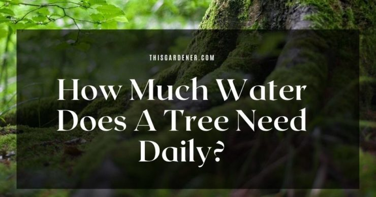 How Much Water Does A Tree Need Daily image main