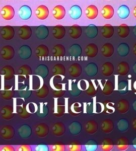 Best LED Grow Lights For Herbs image