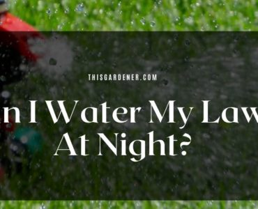 Can I Water My Lawn At Night? image