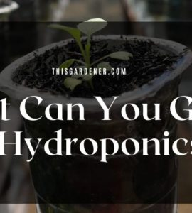 What Can You Grow In Hydroponics?
