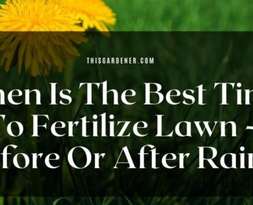 When Is The Best Time To Fertilize Lawn - Before Or After Rain