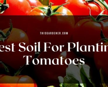 Best Soil For Planting Tomatoes image