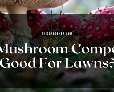 Is Mushroom Compost Good For Lawns