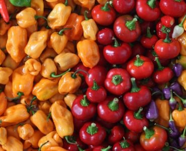 best fertilizer for peppers and tomatoes image